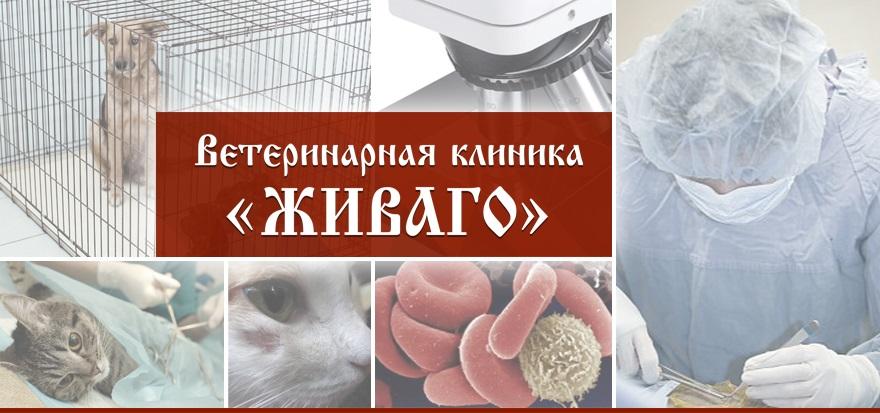 ветеринарная клиника доктор айболит новороссийск отзывы